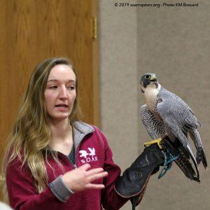 Savanna and falcon
