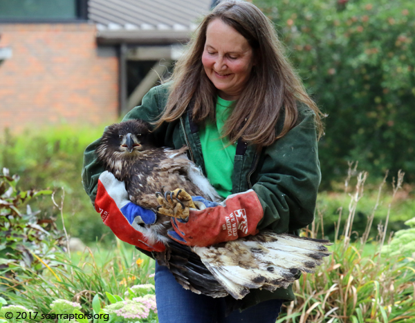 eagle to be released
