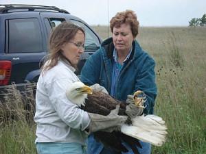 Kay handing eagle to Kathy