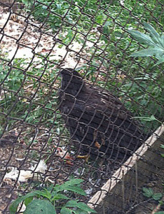 17April12_Eaglet_25May