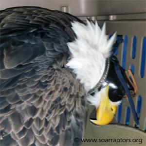 eagle admit