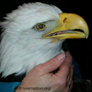 Plymouth Co Eagle