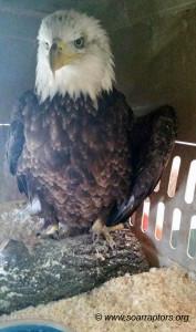 eagle patient