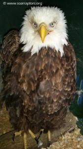 transferred eagle admit