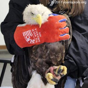 "Kay holds the eagle ""Oklahoma"""