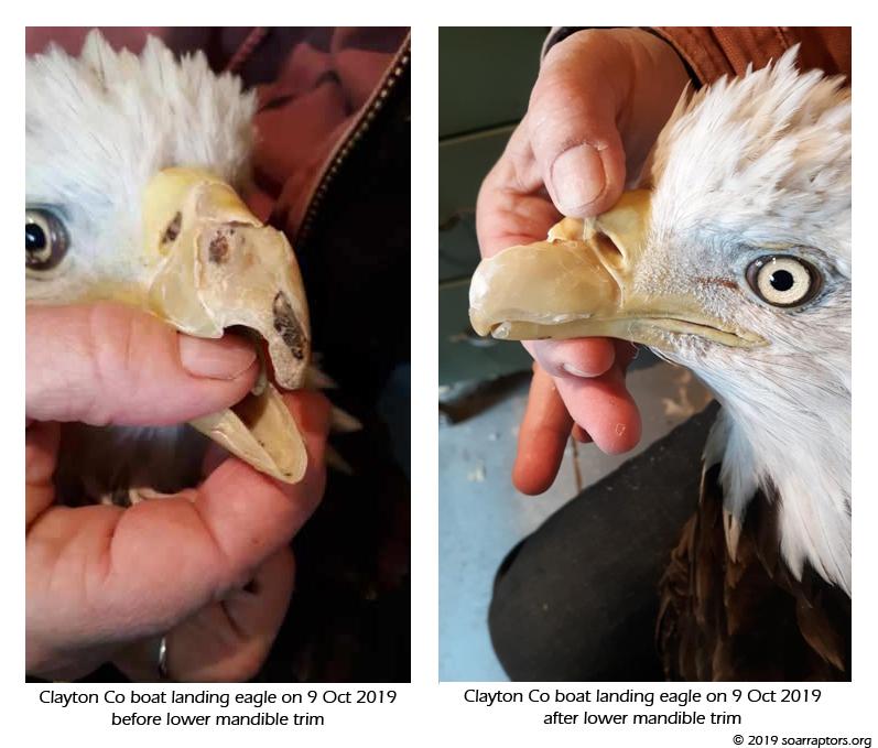 beak growing