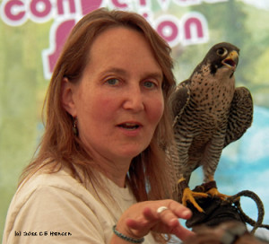 Kay with peregrine