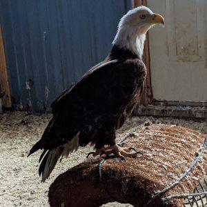 L&D 10 eagle