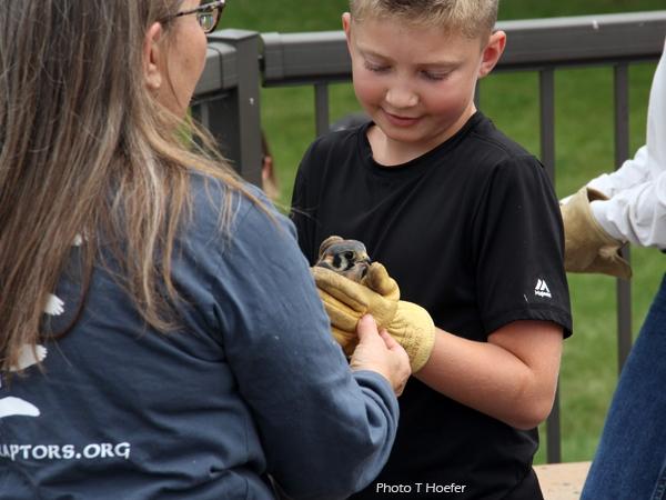 Kay helps with release of American kestrel