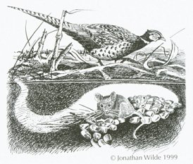 pheasant and mice