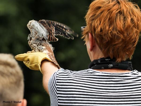Female kestrel released at 2019 SOAR Release Party