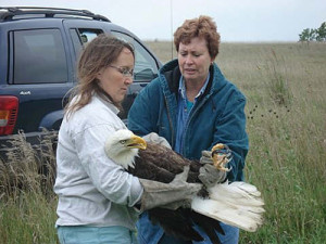 Kay handing eagle to Kathy